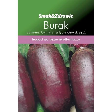 FLORALAND Burak czerwony cylindryczny Beta vulgaris