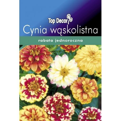 FLORALAND Cynia wąskolistna Zinnia angustifolia