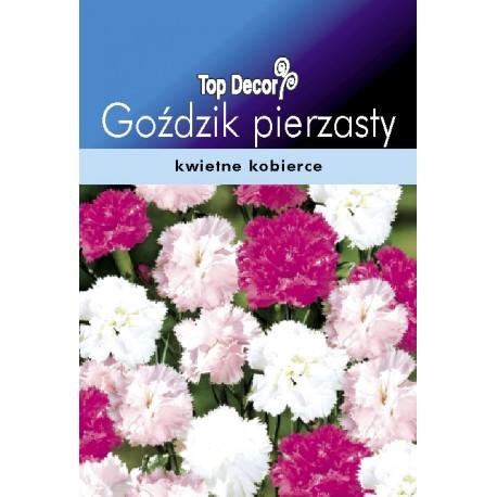 FLORALAND Goździk pierzasty Dianthus plumarius